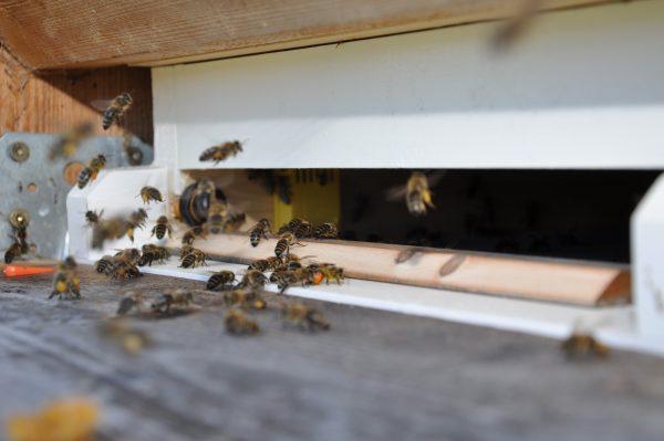 Analysesystem Bienenstock