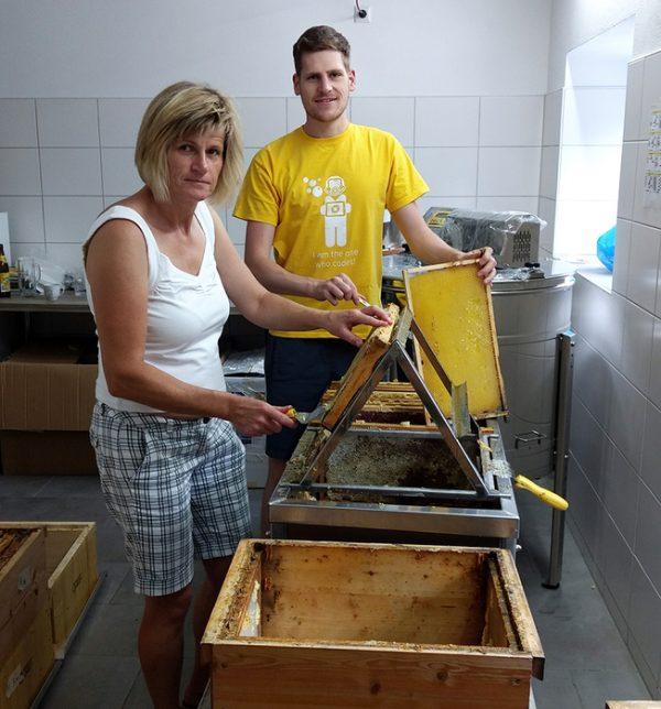 Gute Honigernte
