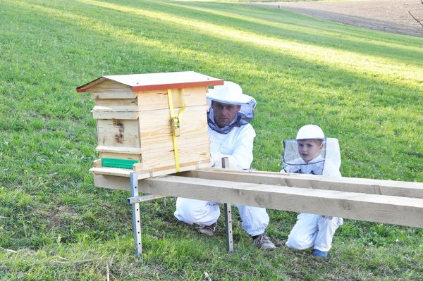 Erstes Bienenvolk