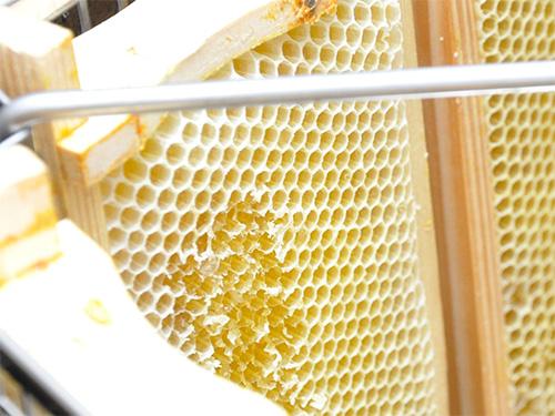 Schlechter Honigertrag im ersten Erntejahr