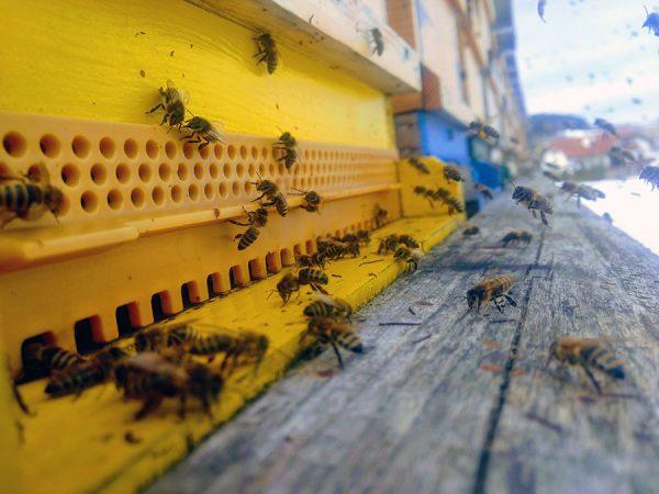 Bienenförderung in der Landwirtschaft